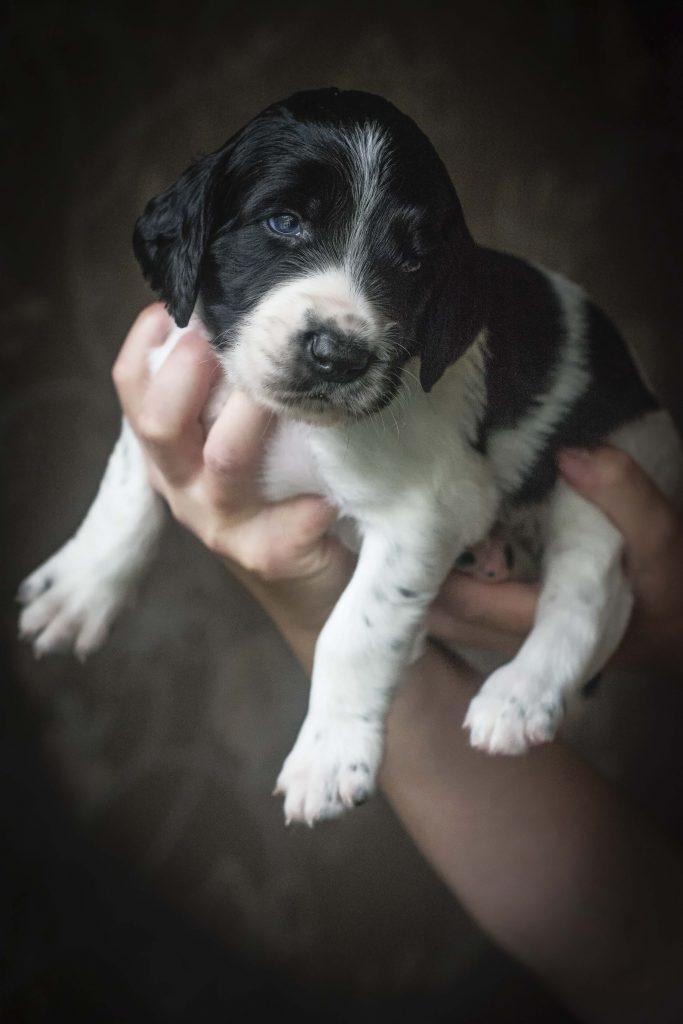 Dierenfotografie Puppy Nicoline