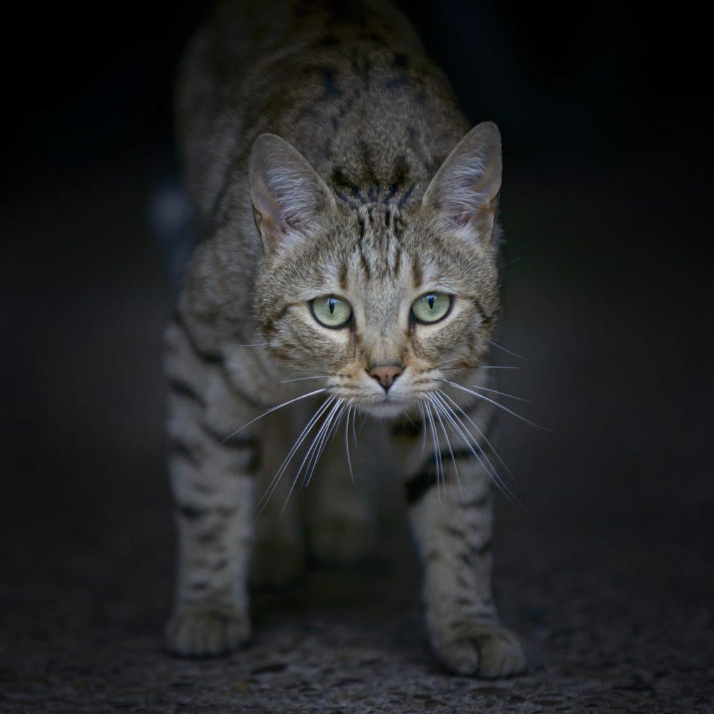 Dierenreportage kat cyper