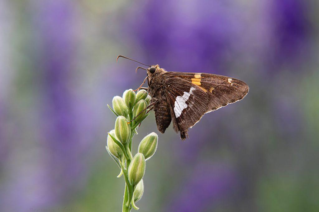 Photowalk Midfulness vlinder