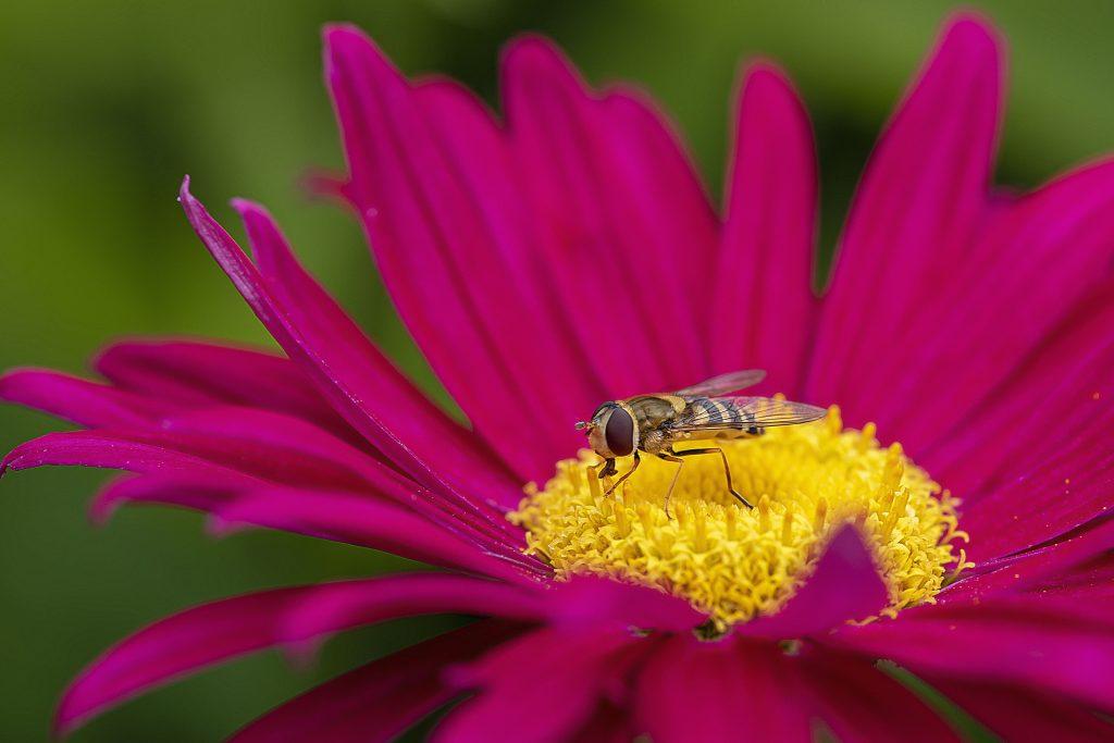 Photowalk bloem met insect